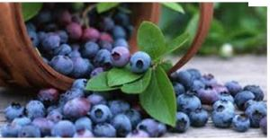 bg-blueberries.jpg